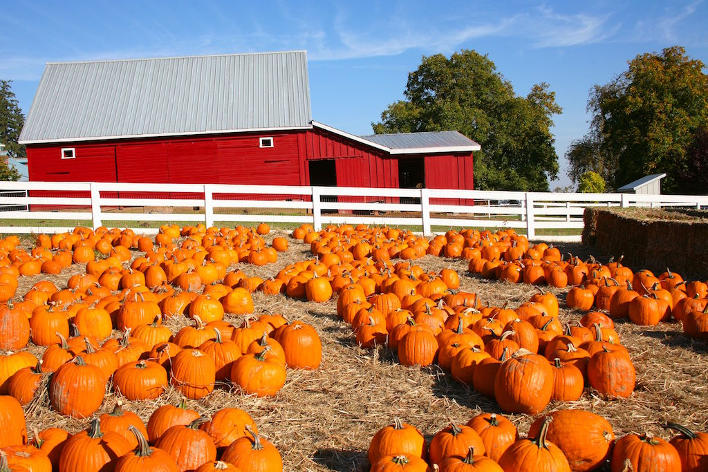 Metro Atlanta family fun this Fall - local pumpkin patches