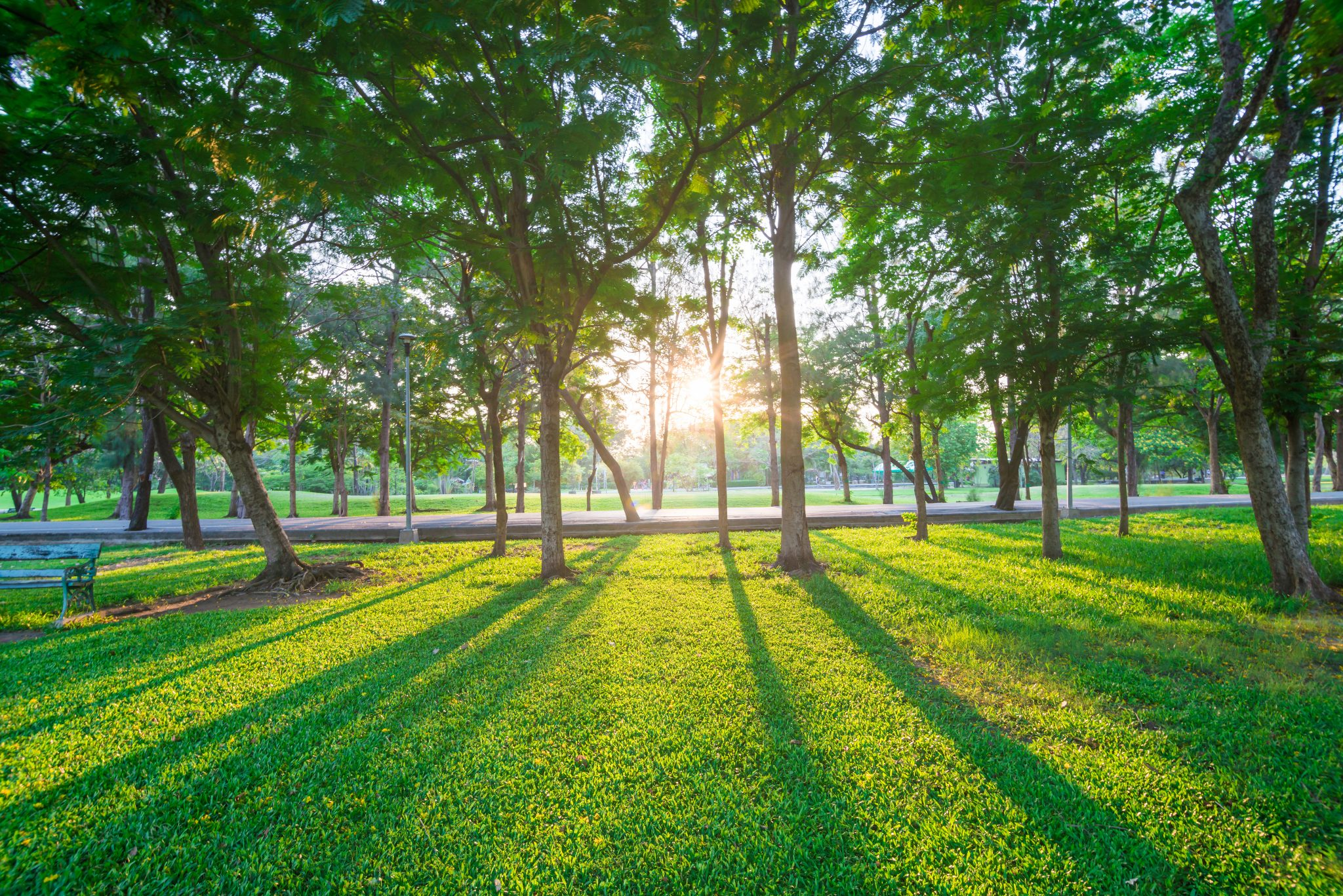 a park like those in powder springs [ Ekachai Wongsakul] © 123rf
