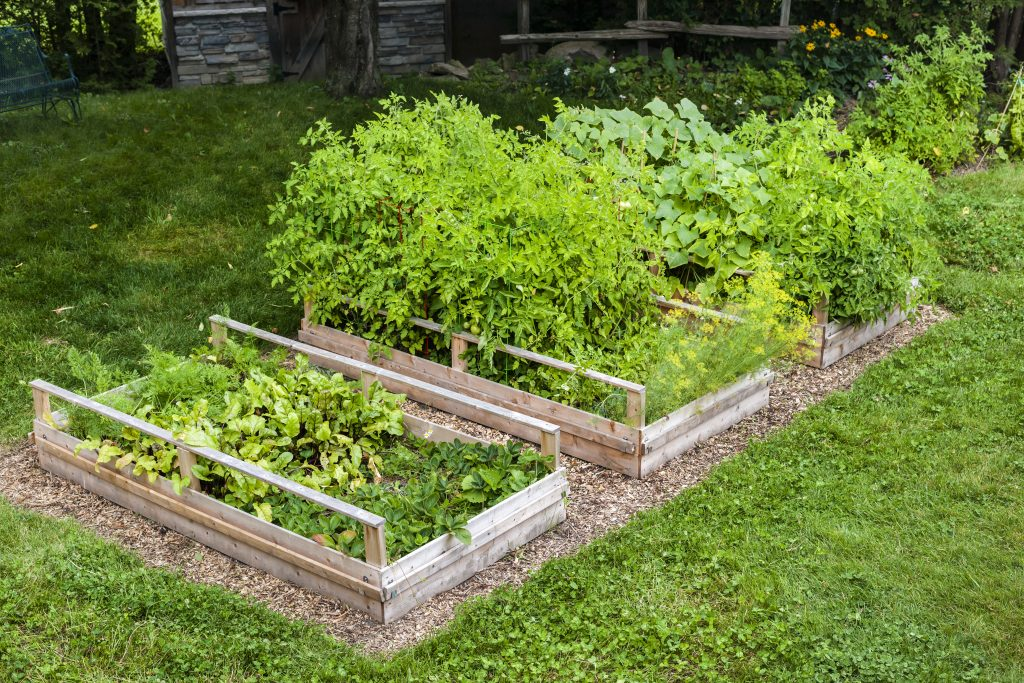Raised Vegetable Beds in a Backyard