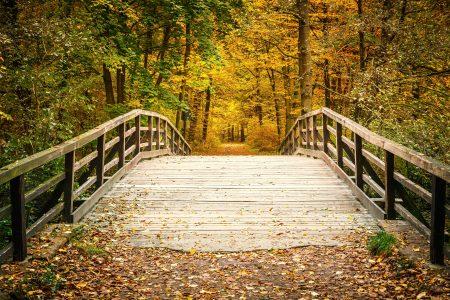 A bridge in a park like Tribble Mill Park sborisov © 123rf